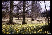 sherborne-grounds